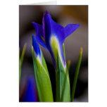 Tarjeta de nota de los iris