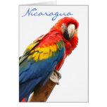 Tarjeta de nota de Nicaragua del Macaw del escarla