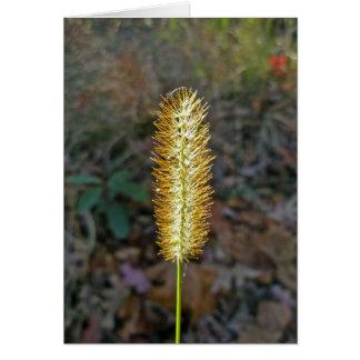 Tarjeta de nota de Seedhead de la hierba