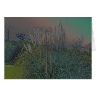 Tarjeta de nota de Solarized de la hierba de pampa