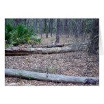 Tarjeta de nota del bosque del pino