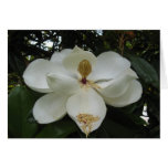 Tarjeta de nota del flor de la magnolia