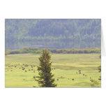 Tarjeta de nota del ganado del lago Canim