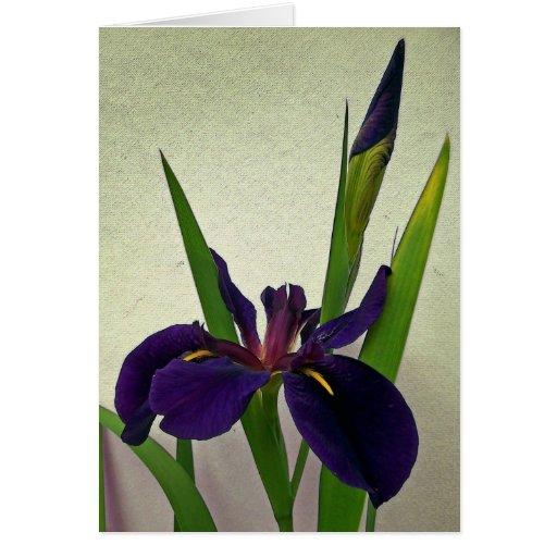 Tarjeta de nota del iris de Luisiana
