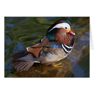 tarjeta de nota del pato de mandarín