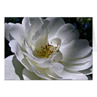 Tarjeta de nota del rosa blanco