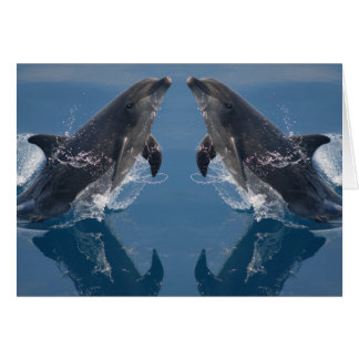 Tarjeta de nota doble de los delfínes