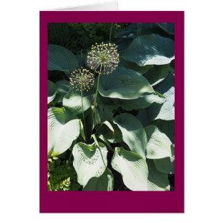 Tarjeta de nota en blanco de las hojas del allium