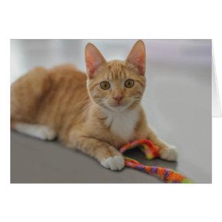 Tarjeta de nota en blanco del gatito por el foco p