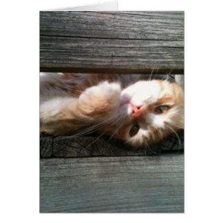 tarjeta de nota en blanco del gato