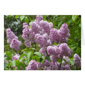 Tarjeta de nota en blanco hermosa de Bush de lila