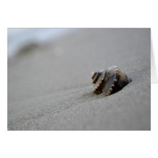 Tarjeta de nota espiral de la playa del Seashell