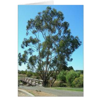 Tarjeta de nota - eucalipto en el puente