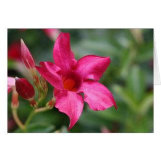 Tarjeta de nota floral de la flor rosada