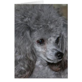 Tarjeta de nota gris del caniche