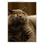 Tarjeta de nota gris del gato