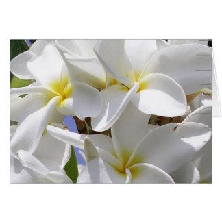 Tarjeta de nota hawaiana magnífica del Plumeria