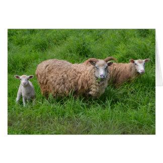 Tarjeta de nota hermosa de la oveja R
