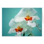 Tarjeta de nota hermosa de las orquídeas