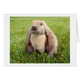 Tarjeta de nota inglesa del conejo del Lop