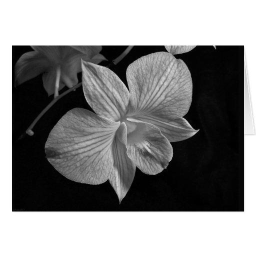 Tarjeta de nota negra y blanca de la orquídea 2
