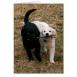 Tarjeta de nota negra y blanca de los perritos