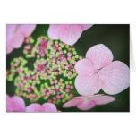 Tarjeta de nota rosada y verde del hibisco