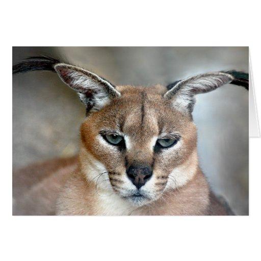 Tarjeta de nota salvaje del gato de Caracal