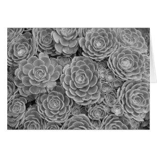 Tarjeta de nota suculenta blanco y negro