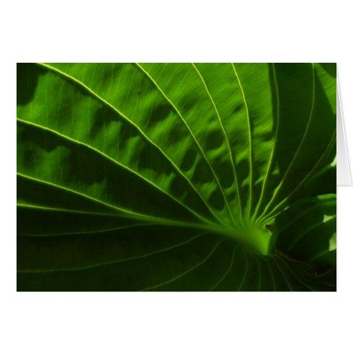 Tarjeta de nota verde de la hoja del Hosta de la p