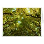 Tarjeta de oro preciosa de los árboles