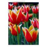 Tarjeta de pascua de los tulipanes 3