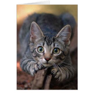 Tarjeta de plata del gatito del Tabby