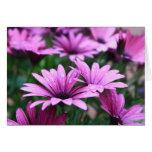 Tarjeta de regalo púrpura de la flor