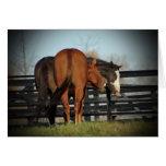 Tarjeta de risa de los caballos