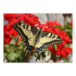 Tarjeta de Swallowtail del anís