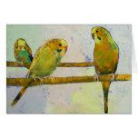 Tarjeta de tres Parakeets