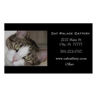 Tarjeta de visita blanca del gato de Tabby