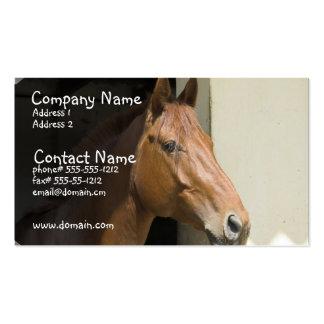 Tarjeta de visita cuarta americana del caballo