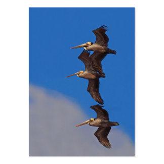 Tarjeta de visita de Birding de tres pelícanos de