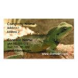 Tarjeta de visita de la foto de la iguana