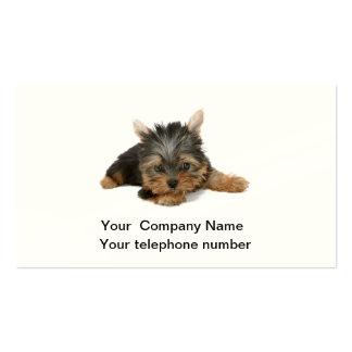 Tarjeta de visita de la foto del perro de Yorkshir