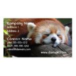 Tarjeta de visita de la panda roja el dormir