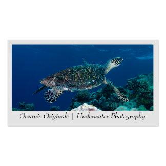 Tarjeta de visita de la tortuga de mar de