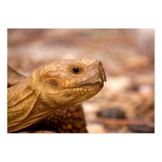 Tarjeta de visita de la tortuga y señales