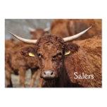 Tarjeta de visita de la vaca de Salers