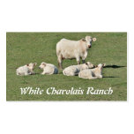 Tarjeta de visita de los ganados vacunos de Charol