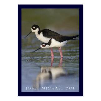 tarjeta de visita del Birder Negro-necked del