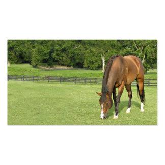 Tarjeta de visita del caballo de bahía