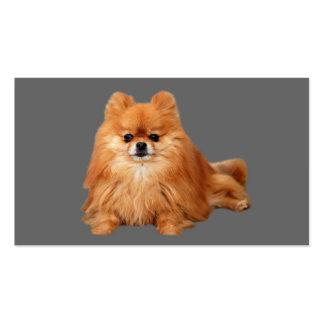Tarjeta de visita del criador de Pomeranian